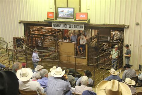 livestock auction agrilife extension sets june 17 beef cattle marketing