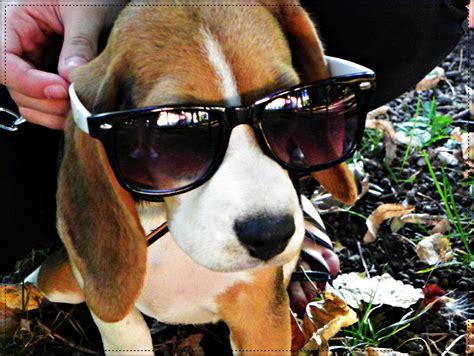 cool puppies puppy cool sangeresripslog69 blogcu