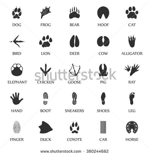 Simple Listy Black And White hoof stock photos images pictures