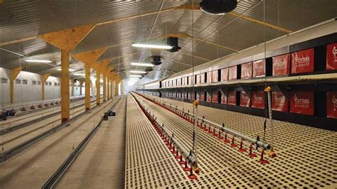 Broiler Poultry Farm Shed by Poultry Farm Invests In Top New Broiler Sheds
