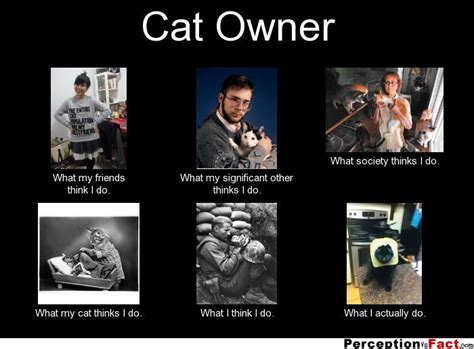 What I Do Meme - cat owner what people think i do what i really do