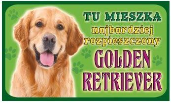 staffy x golden retriever printed animal tabliczka golden retriever