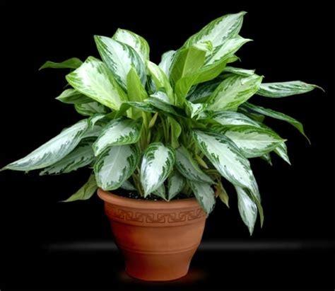 jenis jenis  macam macam tanaman hias part  bibit