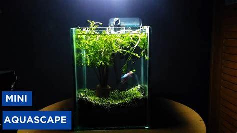 Aquascape 0 7 Co2 buat mini aquascape without co2
