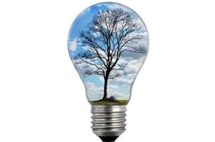 bulb tree bulb light with tree free stock photo domain pictures