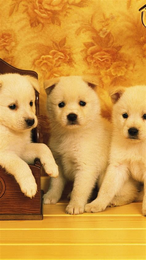 cute puppy dog pet iphone 6 plus wallpaper iphone 6 cute puppy trio wallpaper 734 iphone 6 plus wallpaper