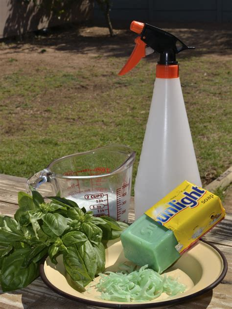 organic pesticide by the gardening blog