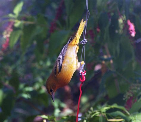 hummingbird handheld feeder images
