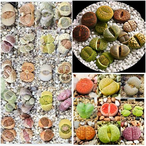 wholesale seed buy wholesale bulk garden seed from china bulk