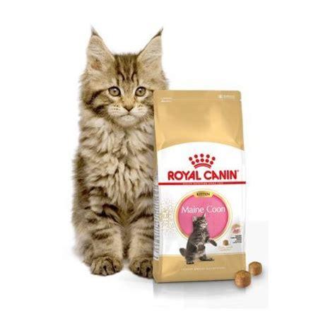 Sale Royal Canin Kitten Maine Coon 36 Makanan Anak Kucing 2 Kg royal canin kitten maine coon 4kg por 243 wnaj zanim kupisz