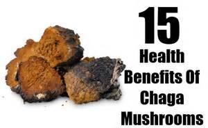 15 amazing health benefits of chaga mushrooms top diy