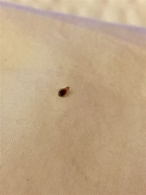 bed bugs report bed bug reports 28 images bed bug inspection report