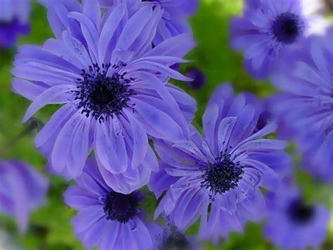 zurbphotos flower photos photo 23