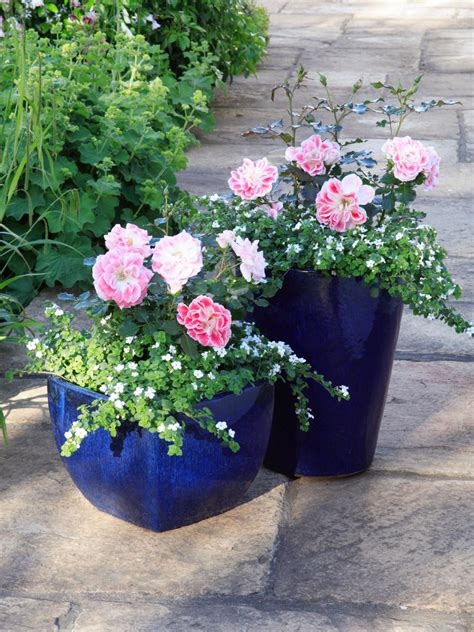 Patio Flower Pots How To Grow Patio Roses In Containers Hgtv
