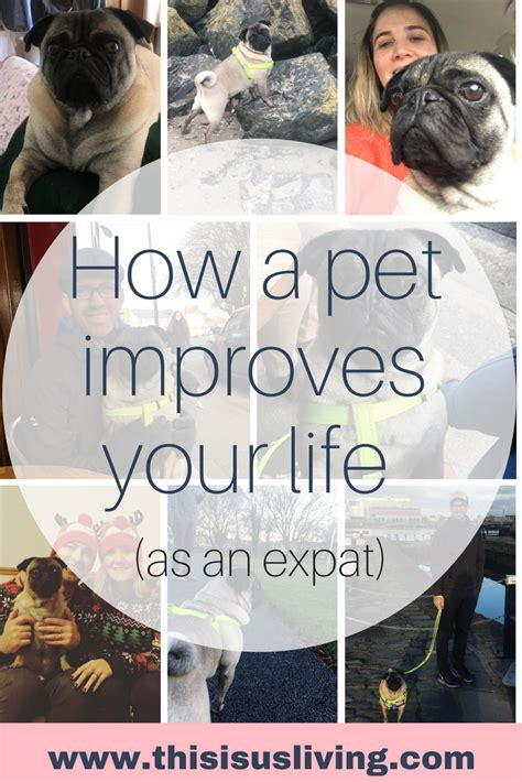 pet technologies on twitter we have moved to new installations how a pet improves your life as an expat this is us living