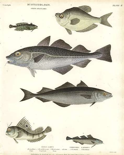 Minyak Ikan Nu Skin khasiat ikan kod khasiat minyak ikan kod