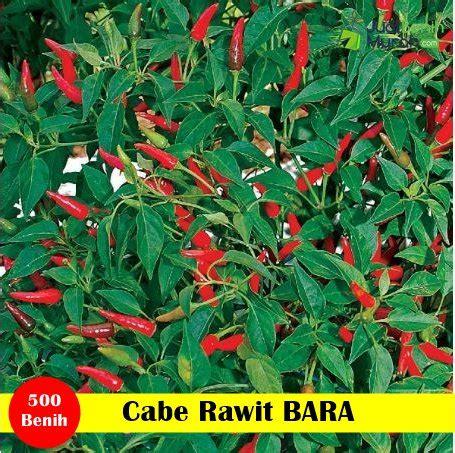Bibit Cabai Rawit Panah Merah cabe rawit bara panah merah jualbenihmurah