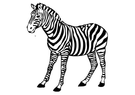printable zebra pics free coloring pages of outline of zebra