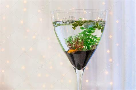 design vis aquarium aquarium met gouden vis als moderne bruiloft