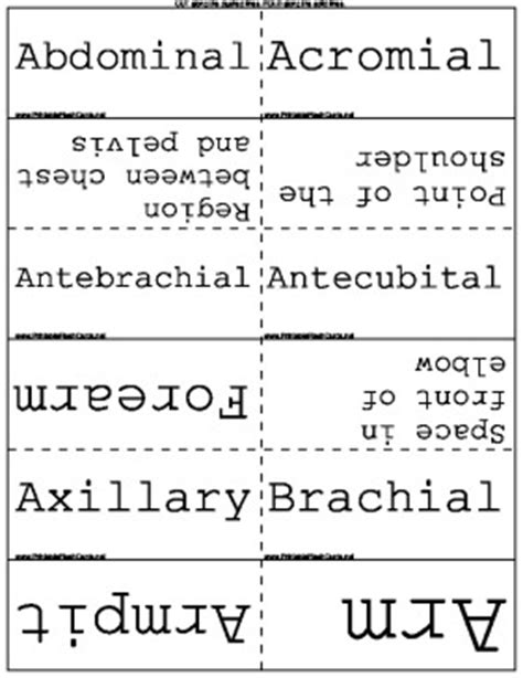 printable flashcards for medical terminology anatomical terms flash cards