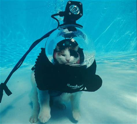 House Of Scuba by Scuba Cat Howstuffworks