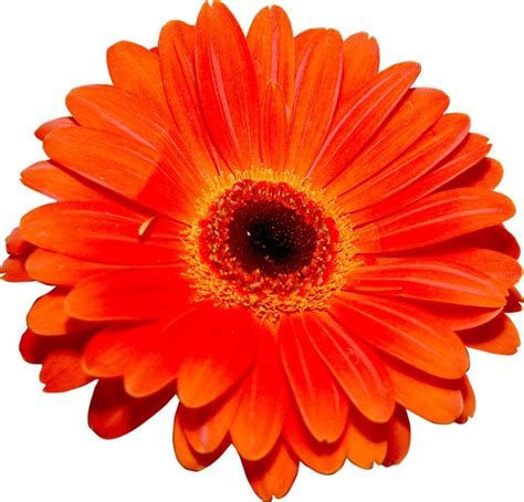 Kalung Fashion Single Flower free single flower stock photo freeimages