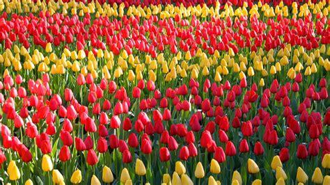 2019 visit keukenhof tulip and flower gardens south