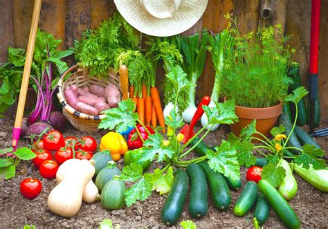 Grow Your Own Food 10 Gardening Ideas For The Beginner Diy Picture Of Vegetable Garden