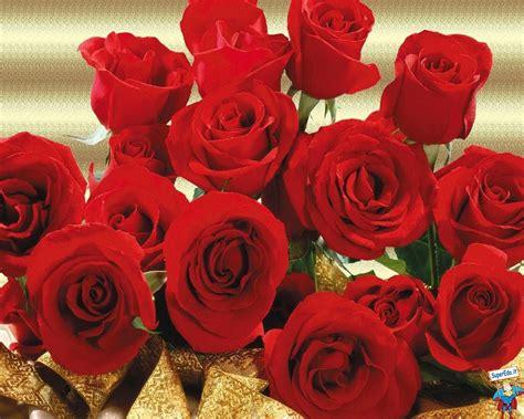 rosa fiori pagina 12