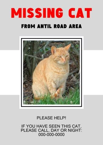 Missing Cat Poster Template How To Create A Missing Cat Poster Lost Cat Poster Template Free