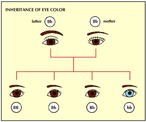 which eye color is dominant mr carrier genetics