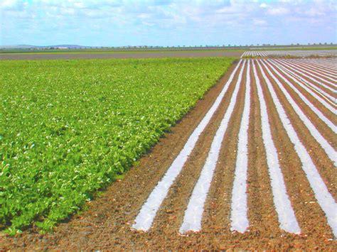 imagenes satelitales para agricultura diversificacion imagenes agricultura de regadio