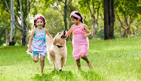 play with dogs why play oak tree veterinary hospital