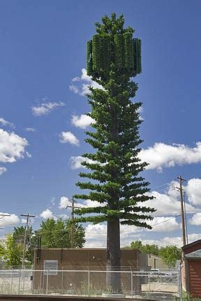boise guardian pine tree cut    cell tower