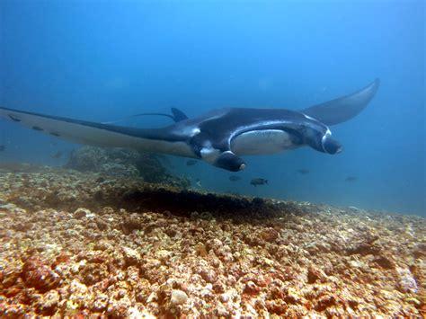 komodo adventure island  dn   indonesia