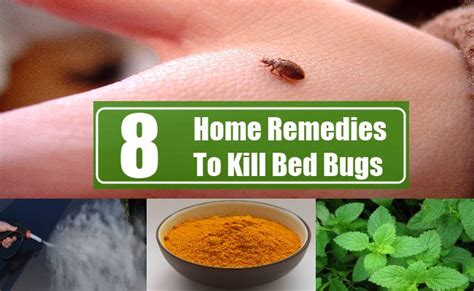 bed bug home remedies 8 home remedies to kill bed bugs search home remedy