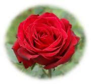 imagenes tarjetas rojas postales rosas rojas