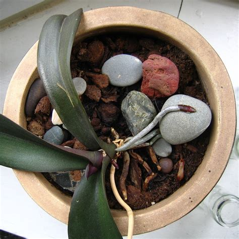 orchid potting mix types of planting mediums for orchids