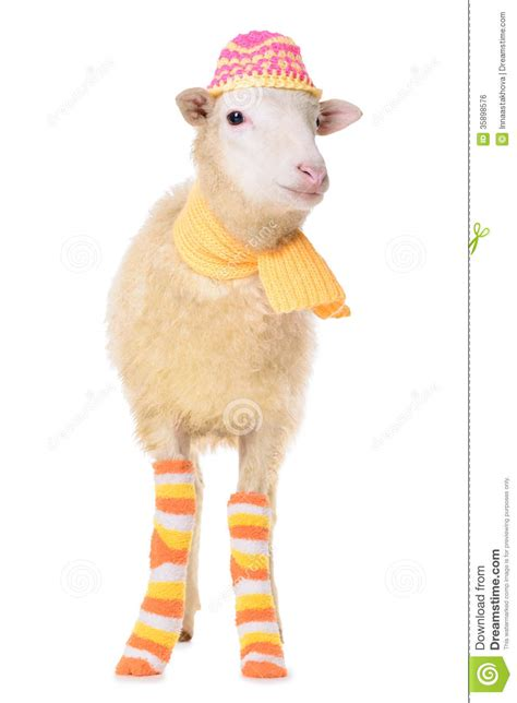 sheep in clothes royalty free stock image image 35898576