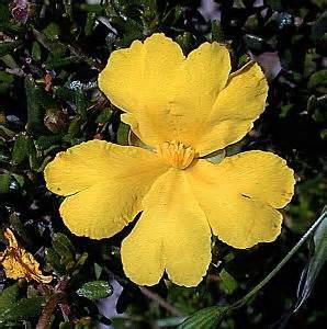 0812 6 39 49 59 Nomor Cantik 11 Angka Simpati Perdana 0812 6394959 flowers of australia