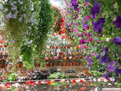beautiful home flower gardens wallpaper