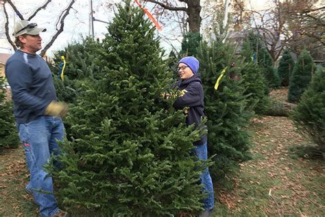 boy scout christmas tree sales mean holidays are in full