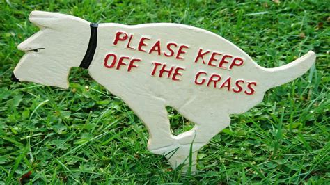 what to do with dog poop in backyard no dog poop yard sign by duke za daisy youtube