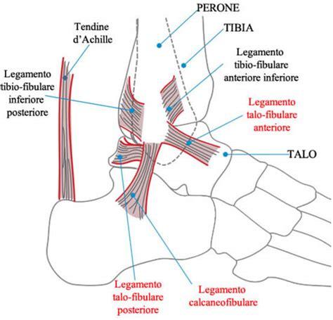 interno caviglia caviglia