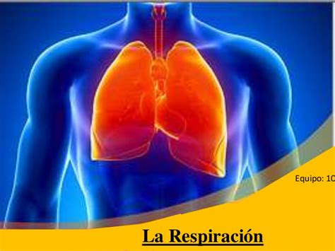 powerpoint templates free download lungs respiraci 243 n humana