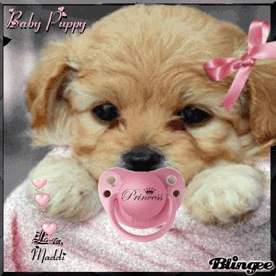 baby puppy pictures baby puppy by maddi picture 129077804 blingee