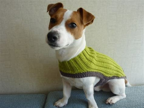 knitting pattern dog coat jack russell 645 best jack russel images on pinterest jack russell