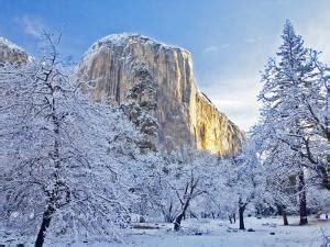 national tree snowy impearial beautiful yosemite national park artwork for sale posters and prints