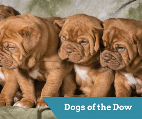 dogs of the dow dogs of the dow is this strategy a winner