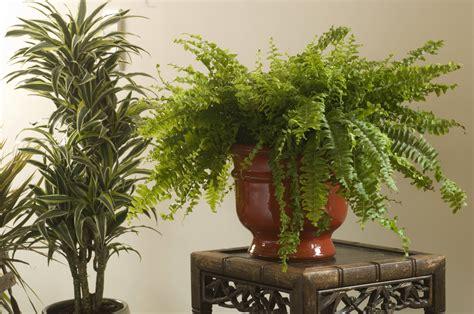 Reconnaitre Maladie Plantes by Reconna 238 Tre Les Maladies Des Plantes D Int 233 Rieur Pratique Fr